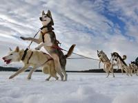 tur-v-angliu-Aviemore_Husky_Sled_Dog_Rally.jpg