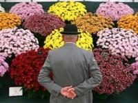 tury_v_angliu_flowers.jpg